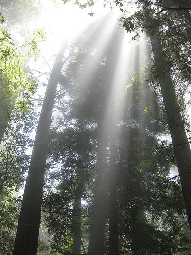 sun-through-the-pines.jpg